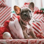 Pug puppy in stocking by Jakob Owens