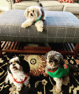 3 cute small dogs