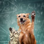 Cat and Dog raising hands 768x666